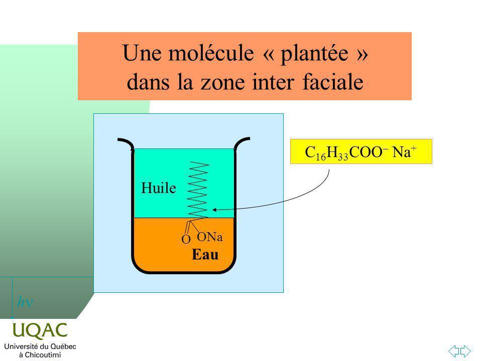 h Une molécule « plantée » dans la zone inter faciale Eau ONa O Huile C 16 H 33 COO Na +
