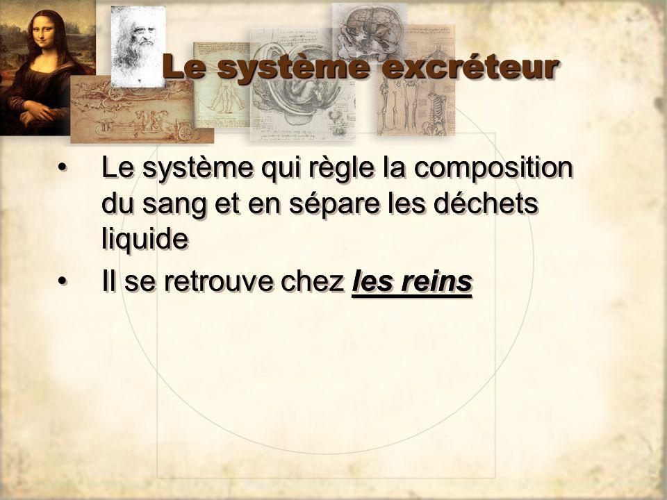 Le système excréteur Le système qui règle la composition du sang et en sépare les déchets liquide Il se retrouve chez les reins Le système qui règle l
