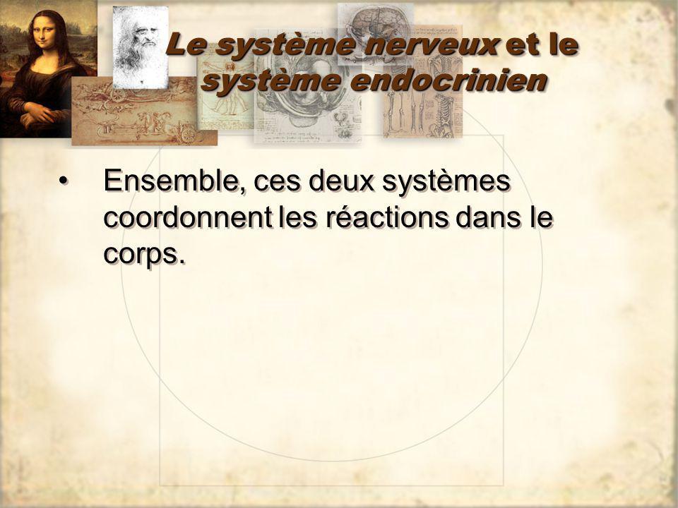 Le système nerveux et le système endocrinien Ensemble, ces deux systèmes coordonnent les réactions dans le corps.