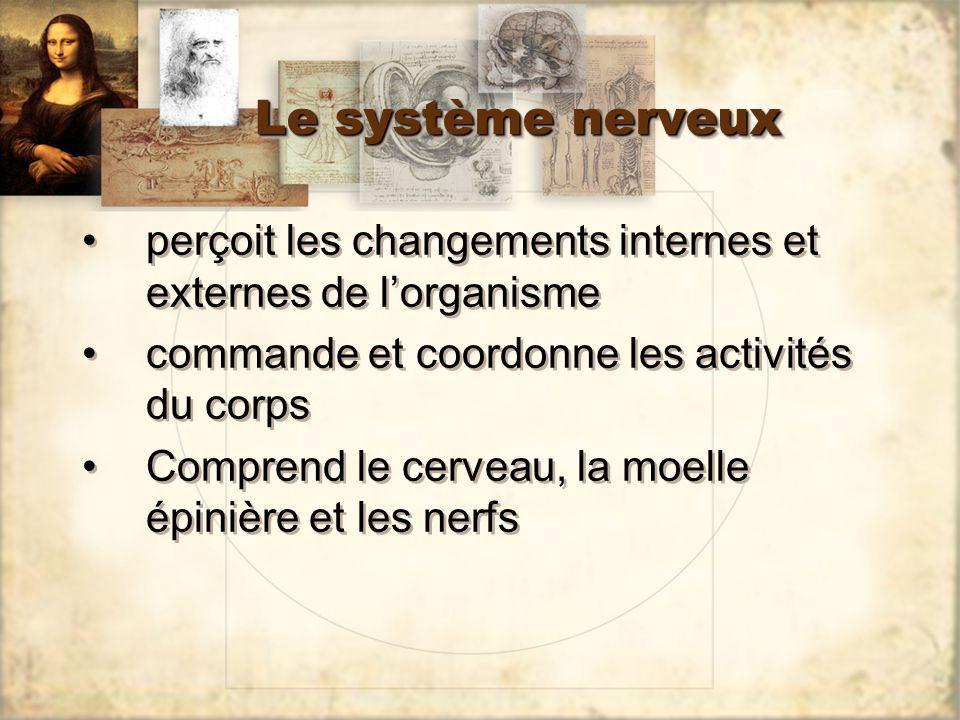 Le système nerveux perçoit les changements internes et externes de lorganisme commande et coordonne les activités du corps Comprend le cerveau, la moe