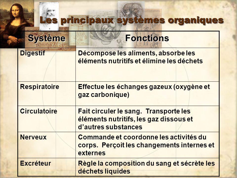 Les principaux systèmes organiques SystèmeFonctions DigestifDécompose les aliments, absorbe les éléments nutritifs et élimine les déchets Respiratoire
