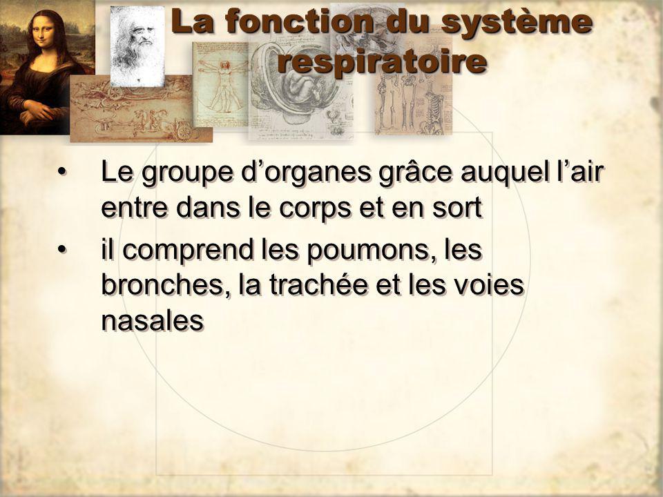 La fonction du système respiratoire Le groupe dorganes grâce auquel lair entre dans le corps et en sort il comprend les poumons, les bronches, la trac