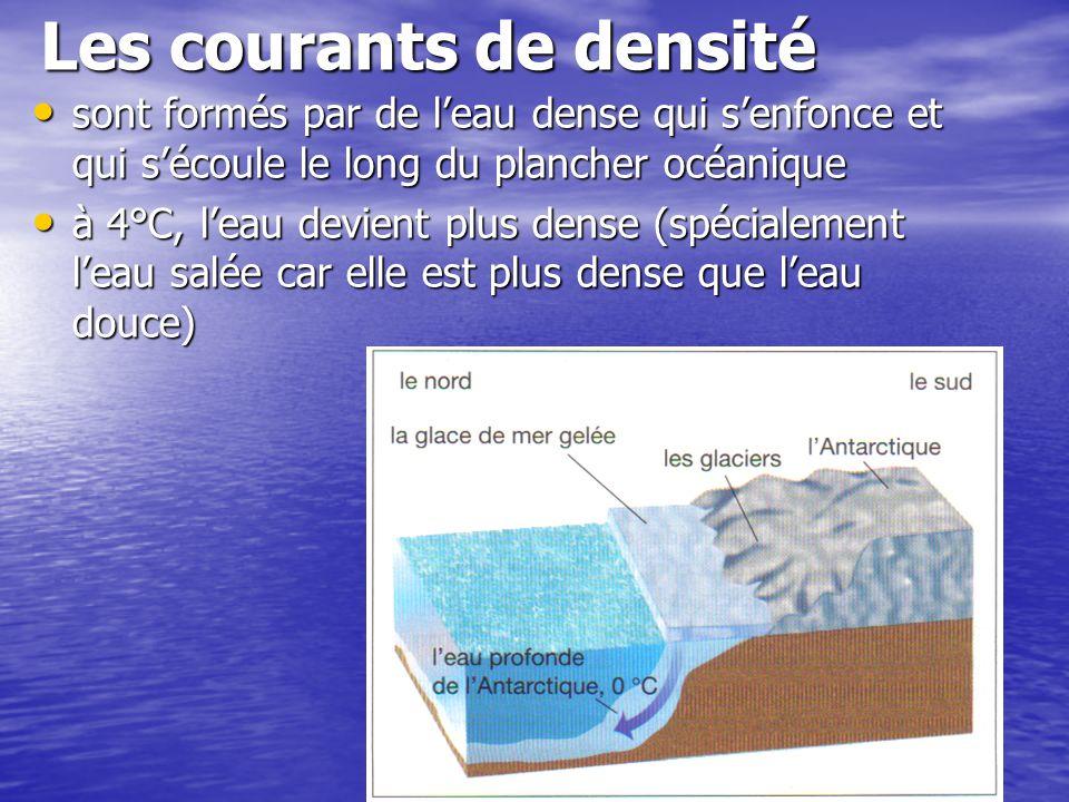 Les courants de densité sont formés par de leau dense qui senfonce et qui sécoule le long du plancher océanique sont formés par de leau dense qui senf