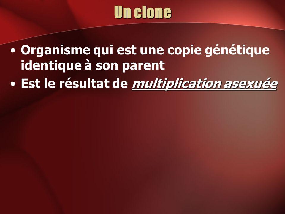 Un clone Organisme qui est une copie génétique identique à son parent multiplication asexuéeEst le résultat de multiplication asexuée