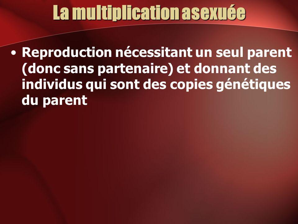 La multiplication asexuée Reproduction nécessitant un seul parent (donc sans partenaire) et donnant des individus qui sont des copies génétiques du pa
