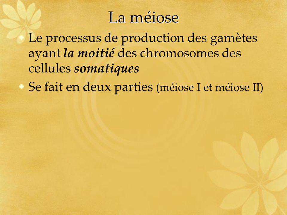 La méiose Le processus de production des gamètes ayant la moitié des chromosomes des cellules somatiques Se fait en deux parties (méiose I et méiose I