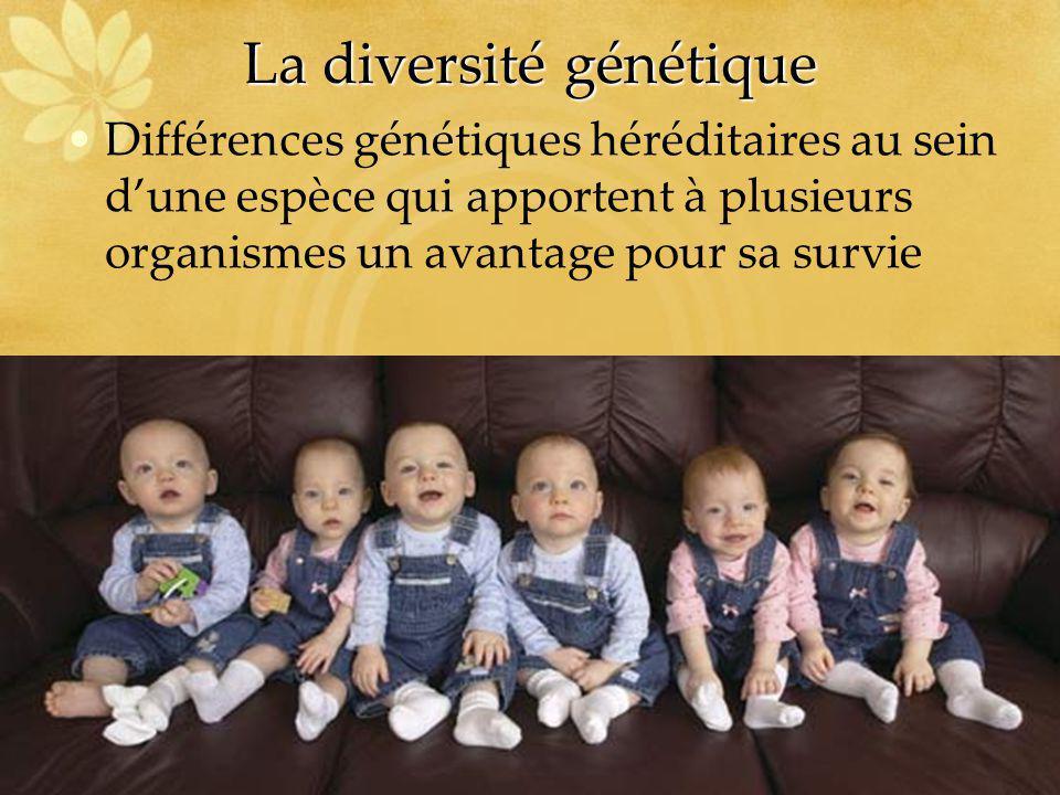 La diversité génétique Différences génétiques héréditaires au sein dune espèce qui apportent à plusieurs organismes un avantage pour sa survie