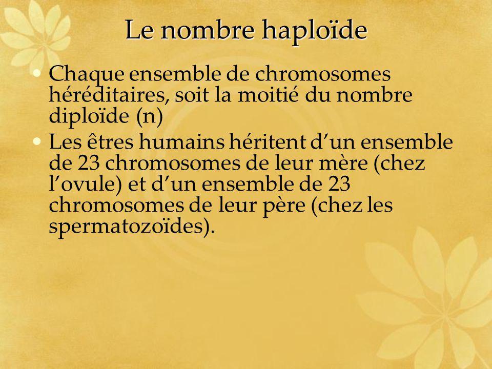 Le nombre haploïde Chaque ensemble de chromosomes héréditaires, soit la moitié du nombre diploïde (n) Les êtres humains héritent dun ensemble de 23 ch
