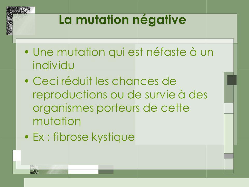 La mutation négative Une mutation qui est néfaste à un individu Ceci réduit les chances de reproductions ou de survie à des organismes porteurs de cette mutation Ex : fibrose kystique