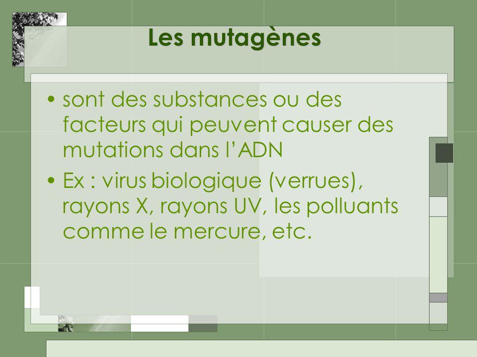 Les mutagènes sont des substances ou des facteurs qui peuvent causer des mutations dans lADN Ex : virus biologique (verrues), rayons X, rayons UV, les polluants comme le mercure, etc.