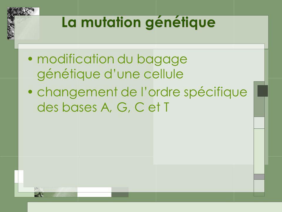 La mutation génétique modification du bagage génétique dune cellule changement de lordre spécifique des bases A, G, C et T
