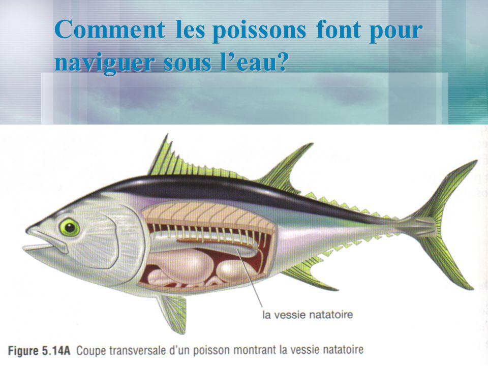 Comment les poissons font pour naviguer sous leau?