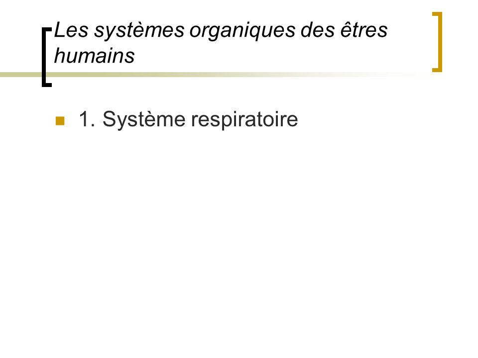 1.Système respiratoire