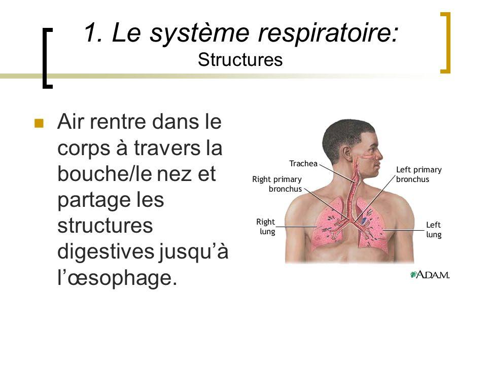 1. Le système respiratoire: Structures Air rentre dans le corps à travers la bouche/le nez et partage les structures digestives jusquà lœsophage.