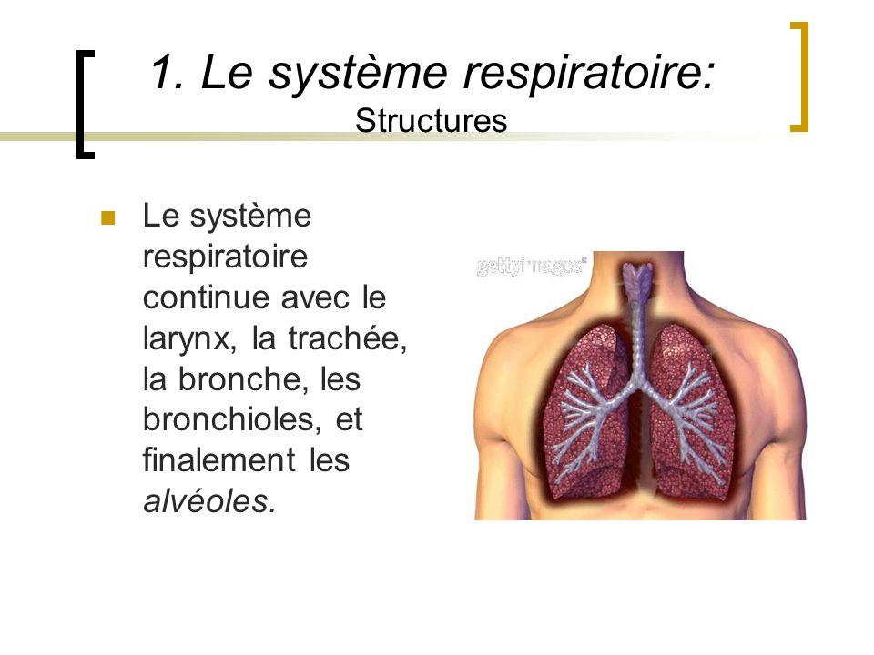 1. Le système respiratoire: Structures Le système respiratoire continue avec le larynx, la trachée, la bronche, les bronchioles, et finalement les alv