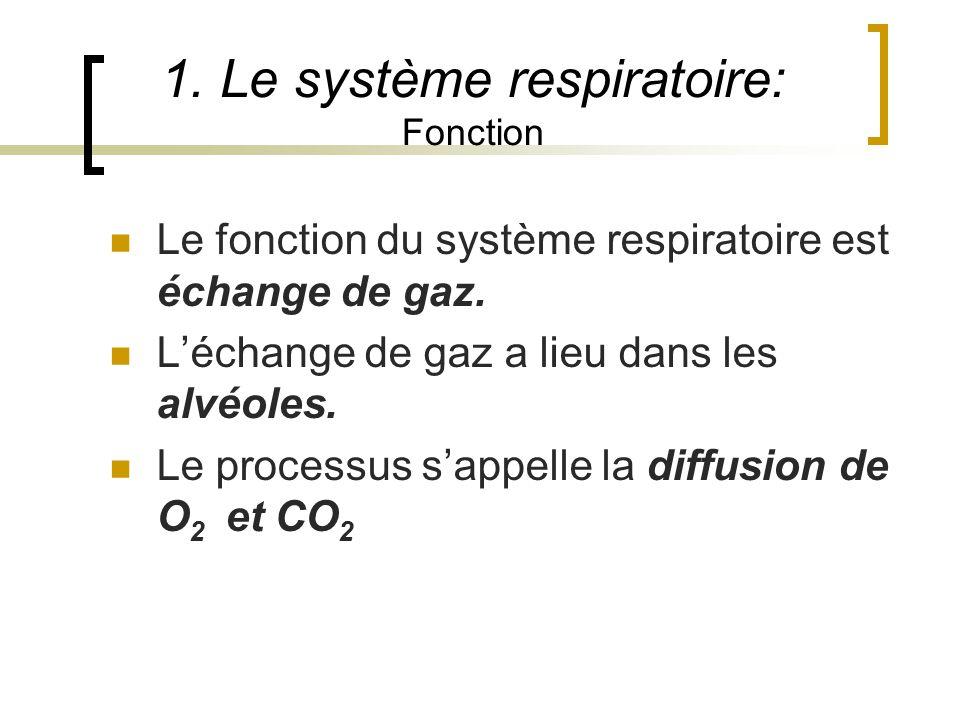 1. Le système respiratoire: Fonction Le fonction du système respiratoire est échange de gaz. Léchange de gaz a lieu dans les alvéoles. Le processus sa