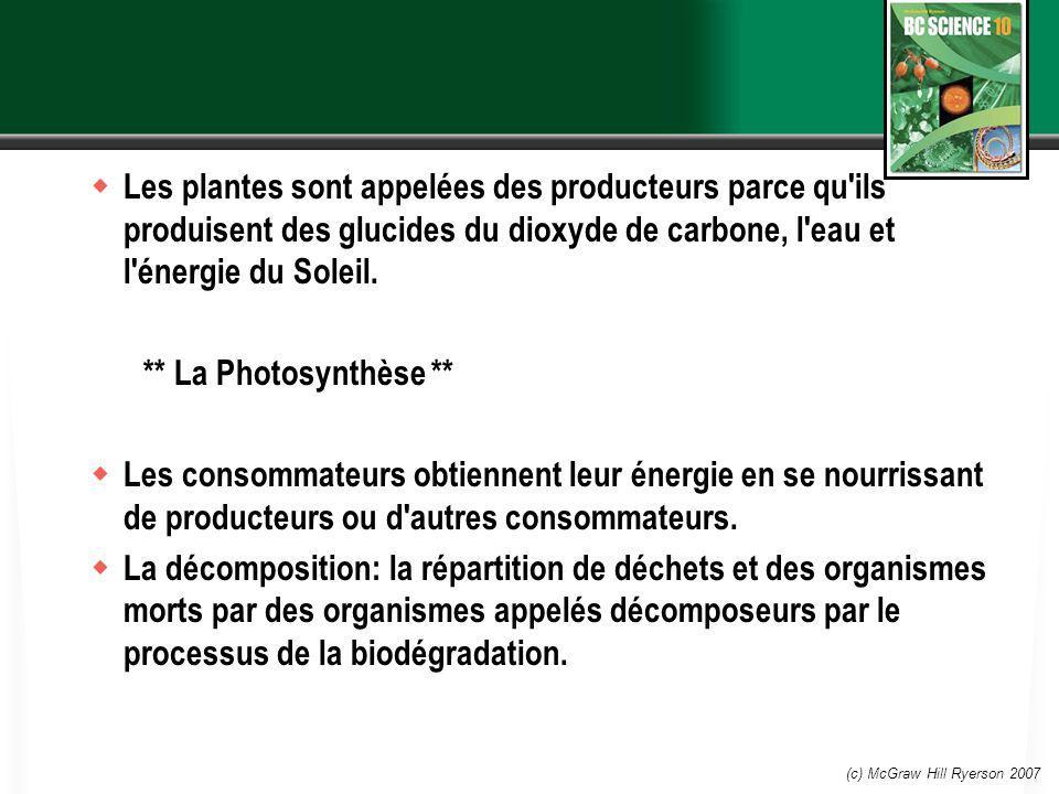 (c) McGraw Hill Ryerson 2007 Les plantes sont appelées des producteurs parce qu'ils produisent des glucides du dioxyde de carbone, l'eau et l'énergie