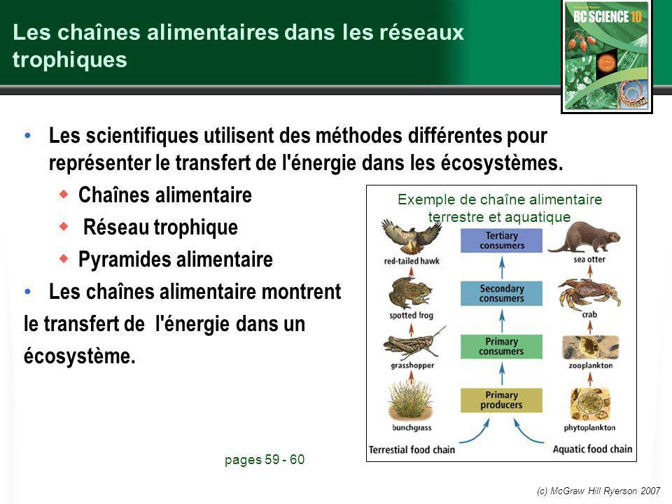 (c) McGraw Hill Ryerson 2007 Les chaînes alimentaires dans les réseaux trophiques Les scientifiques utilisent des méthodes différentes pour représente