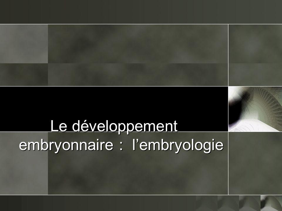Le développement embryonnaire : lembryologie