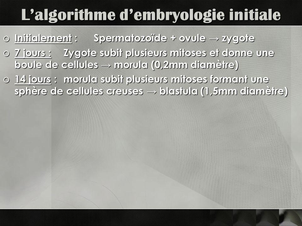 Lalgorithme dembryologie initiale o Initialement : Spermatozoïde + ovule zygote o 7 jours : Zygote subit plusieurs mitoses et donne une boule de cellules morula (0,2mm diamètre) o 14 jours : morula subit plusieurs mitoses formant une sphère de cellules creuses blastula (1,5mm diamètre)