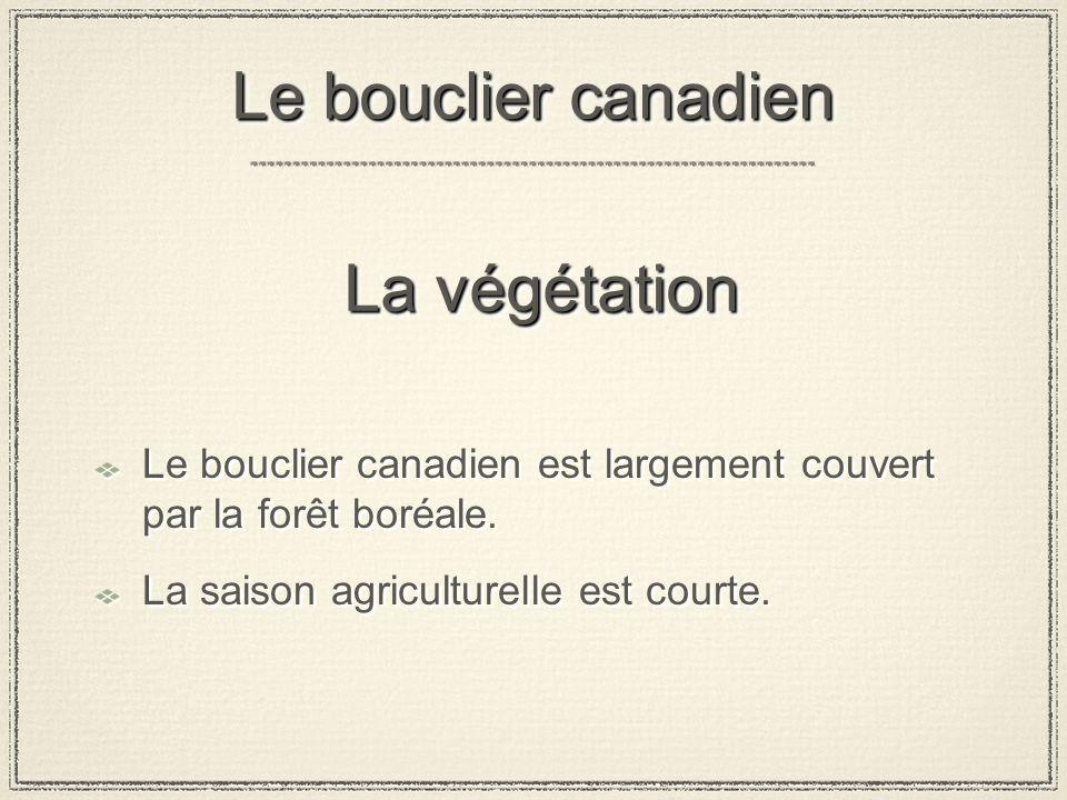 La végétation Le bouclier canadien est largement couvert par la forêt boréale.