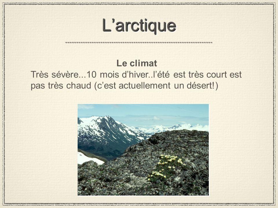 LarctiqueLarctique Le climat Très sévère...10 mois dhiver..lété est très court est pas très chaud (cest actuellement un désert!)