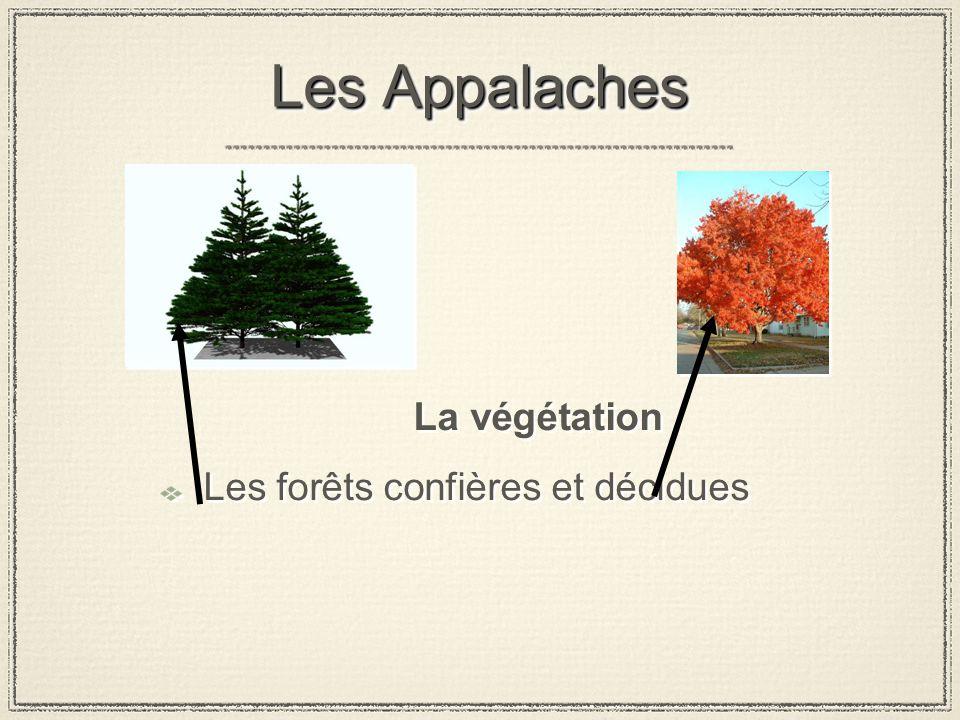 Les Appalaches La végétation Les forêts confières et décidues La végétation Les forêts confières et décidues