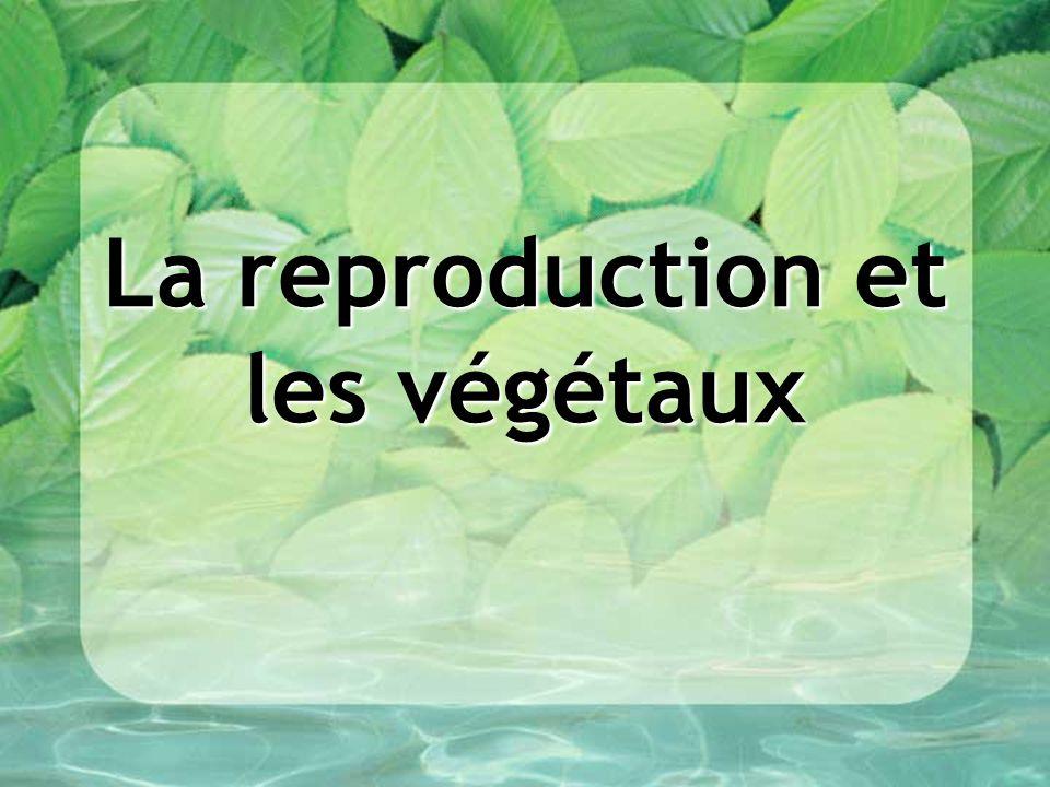 La reproduction et les végétaux