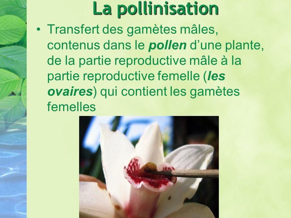 La pollinisation Transfert des gamètes mâles, contenus dans le pollen dune plante, de la partie reproductive mâle à la partie reproductive femelle (le
