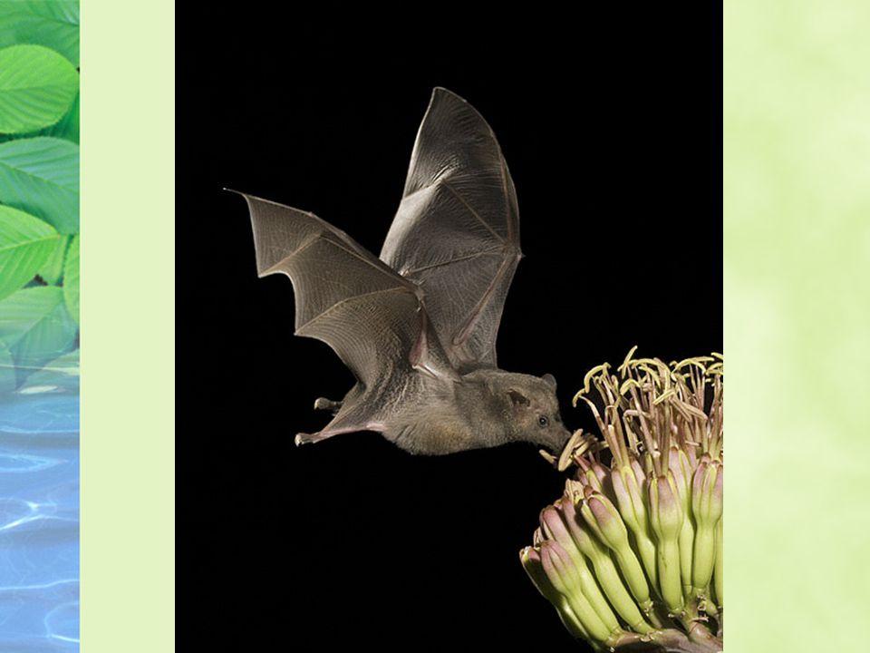 La pollinisation Transfert des gamètes mâles, contenus dans le pollen dune plante, de la partie reproductive mâle à la partie reproductive femelle (les ovaires) qui contient les gamètes femelles