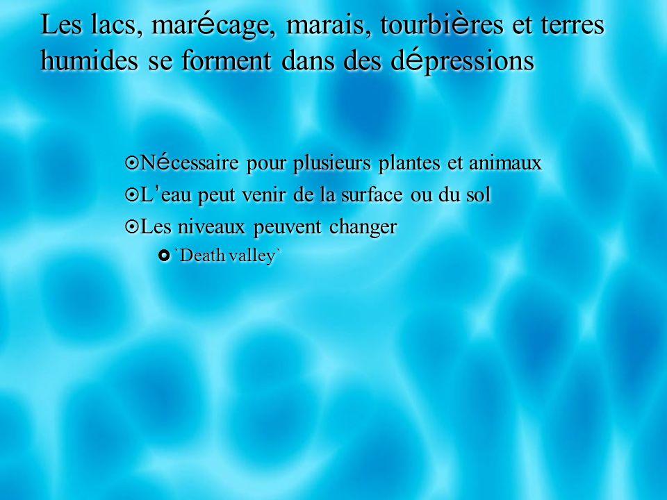 Les lacs, mar é cage, marais, tourbi è res et terres humides se forment dans des d é pressions N é cessaire pour plusieurs plantes et animaux L eau pe