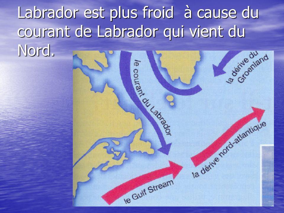 Labrador est plus froid à cause du courant de Labrador qui vient du Nord.