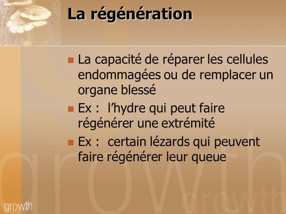 La régénération La capacité de réparer les cellules endommagées ou de remplacer un organe blessé Ex : lhydre qui peut faire régénérer une extrémité Ex
