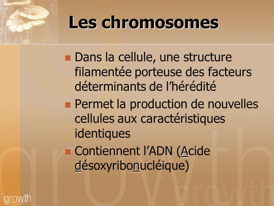 Les chromosomes Dans la cellule, une structure filamentée porteuse des facteurs déterminants de lhérédité Permet la production de nouvelles cellules a