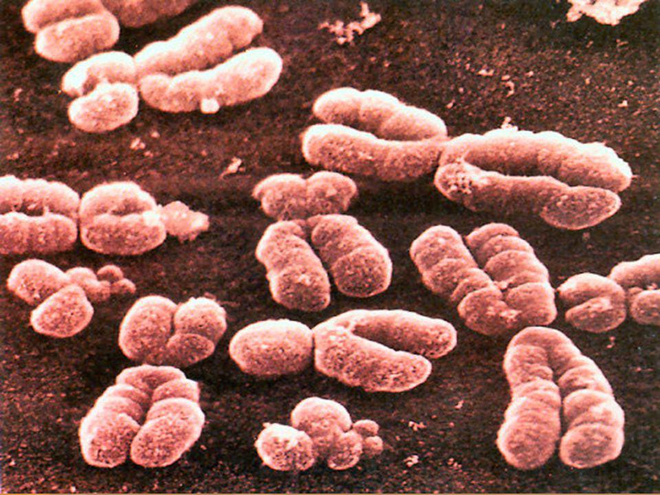 Chromosomes dans la cellule http://student.britannica.com/nobelp rize/art-68420