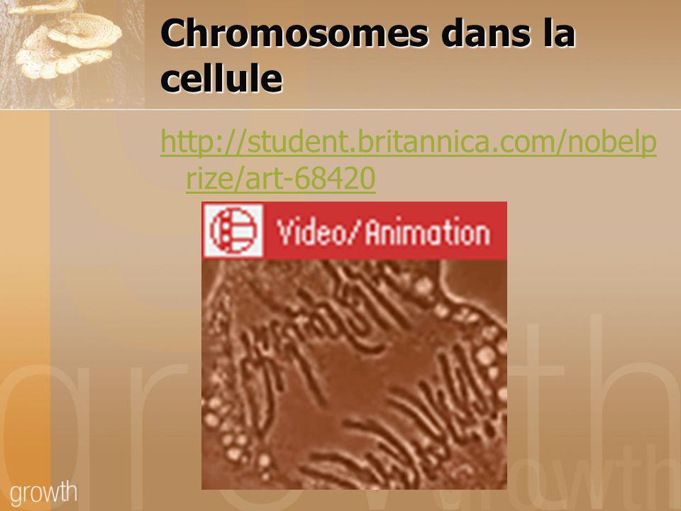 La mitose La division du noyau dune cellule, qui produit un dédoublement du matériel génétique et deux cellules filles identiques