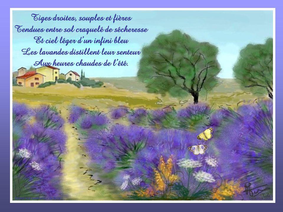 Tiges droites, souples et fières Tendues entre sol craquelé de sécheresse Et ciel léger dun infini bleu Les lavandes distillent leur senteur Aux heures chaudes de lété.