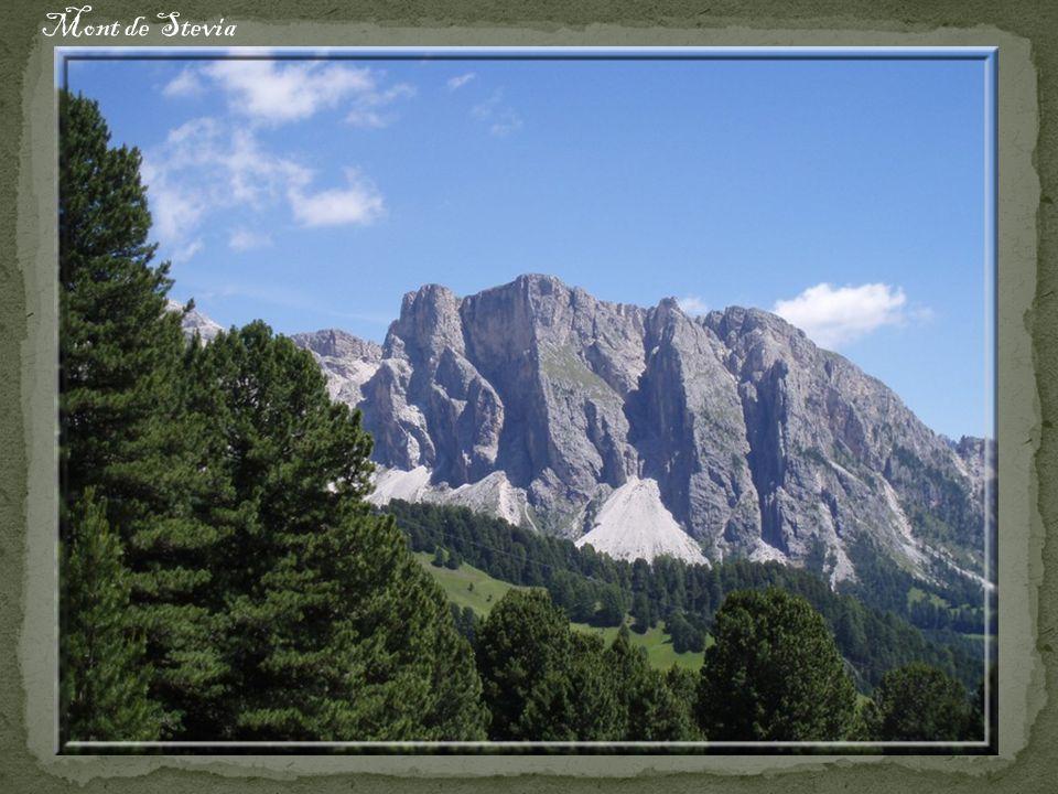 Mont de Stevia