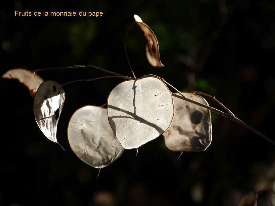 Labbaye de Bodon ( Rémuzat )