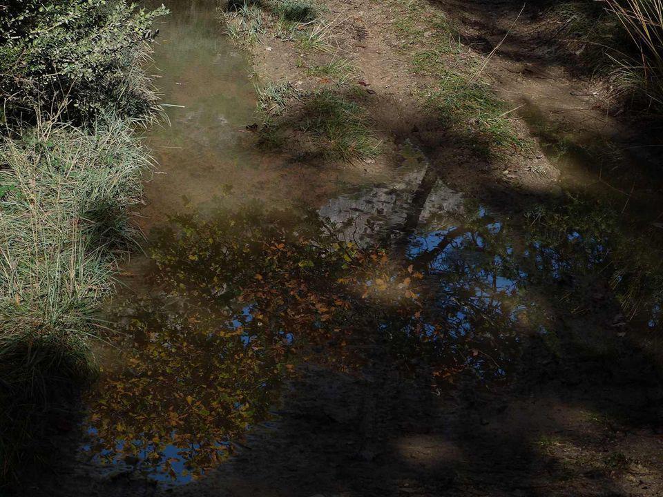 Forêt de chênes a Tolignan
