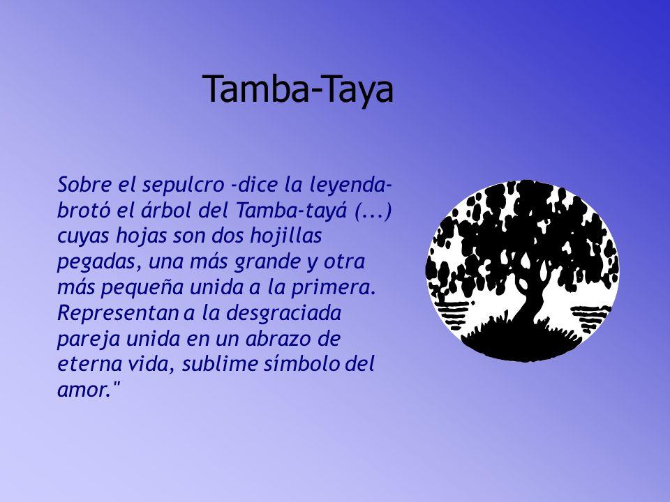 Tamba-Taya Sobre el sepulcro -dice la leyenda- brotó el árbol del Tamba-tayá (...) cuyas hojas son dos hojillas pegadas, una más grande y otra más pequeña unida a la primera.