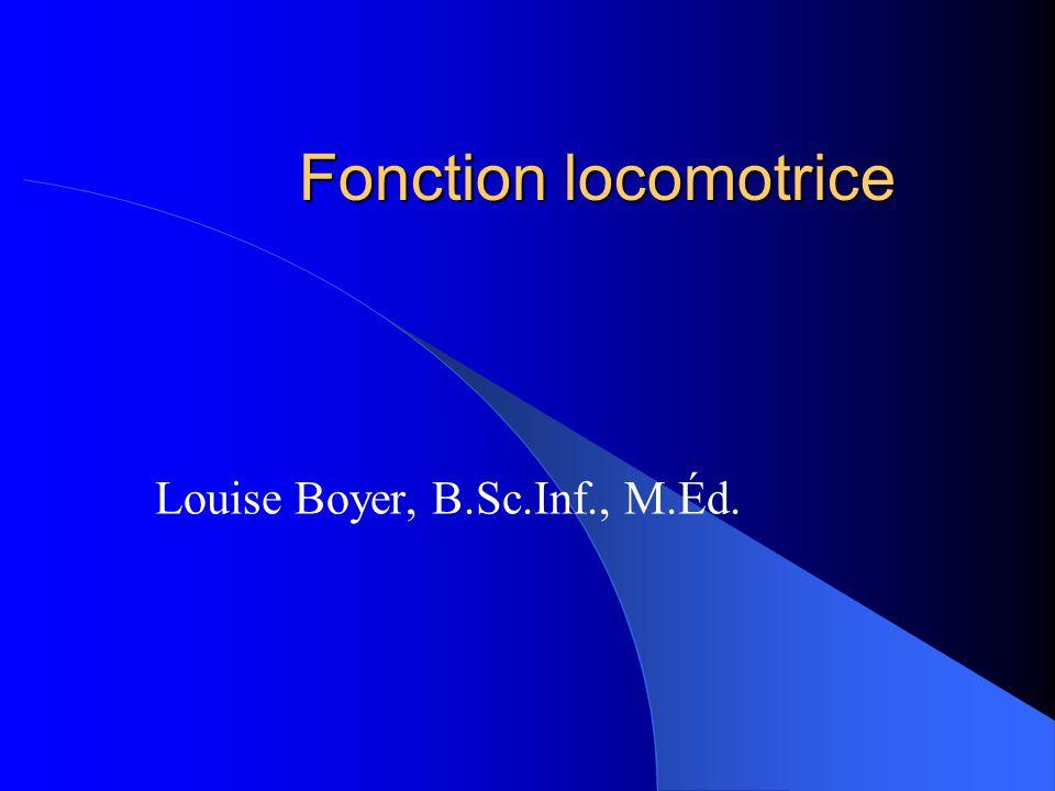 Fonction locomotrice Assure la survie de lespèce: déplacement, mouvements, mobilité Participe à: régulation thermique, au contrôle de la circulation sanguine, la respiration, au contrôle de la miction