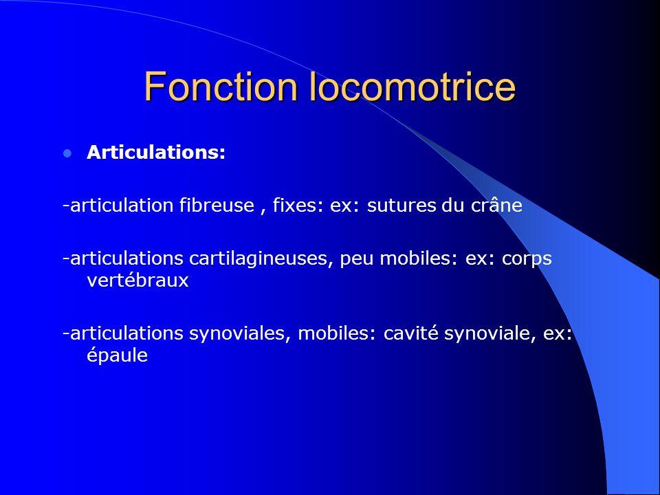Fonction locomotrice Articulations: -articulation fibreuse, fixes: ex: sutures du crâne -articulations cartilagineuses, peu mobiles: ex: corps vertébr