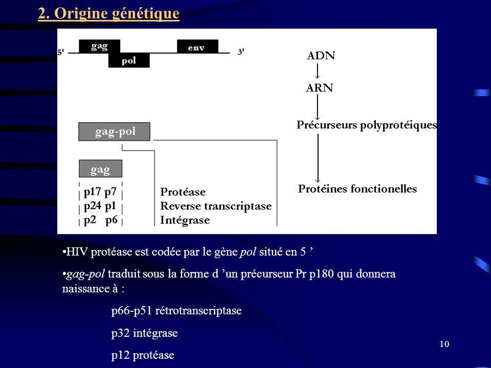 10 HIV protéase est codée par le gène pol situé en 5 gag-pol traduit sous la forme d un précurseur Pr p180 qui donnera naissance à : p66-p51 rétrotranscriptase p32 intégrase p12 protéase 2.