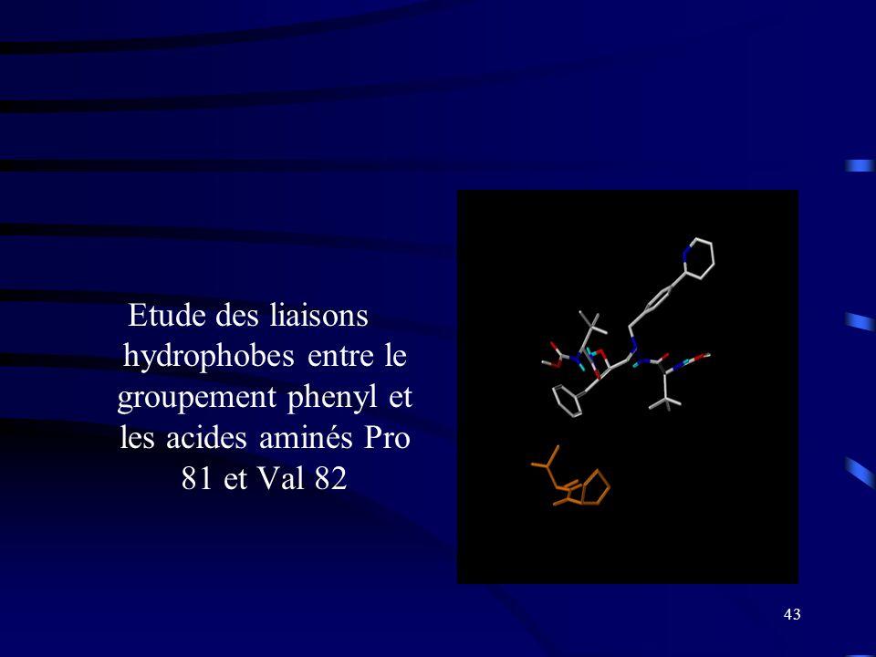 43 Etude des liaisons hydrophobes entre le groupement phenyl et les acides aminés Pro 81 et Val 82