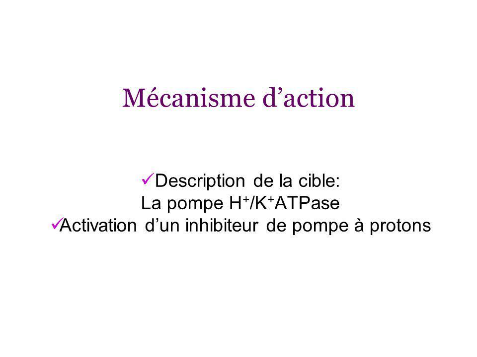Mécanisme daction Description de la cible: La pompe H + /K + ATPase Activation dun inhibiteur de pompe à protons