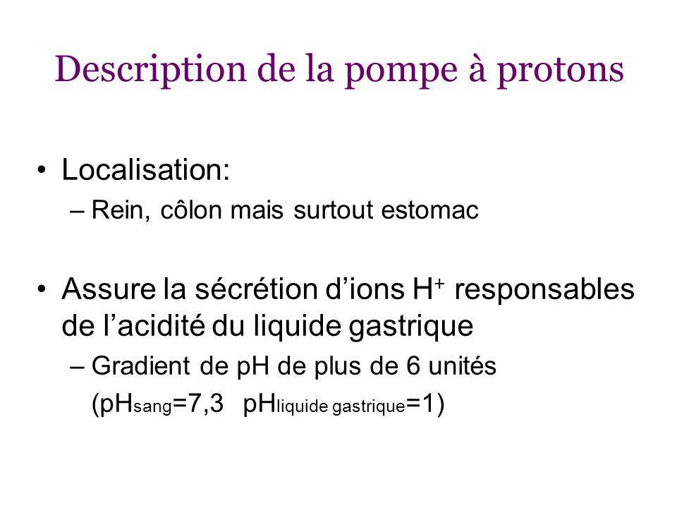 Description de la pompe à protons Localisation: –Rein, côlon mais surtout estomac Assure la sécrétion dions H + responsables de lacidité du liquide gastrique –Gradient de pH de plus de 6 unités (pH sang =7,3 pH liquide gastrique =1)