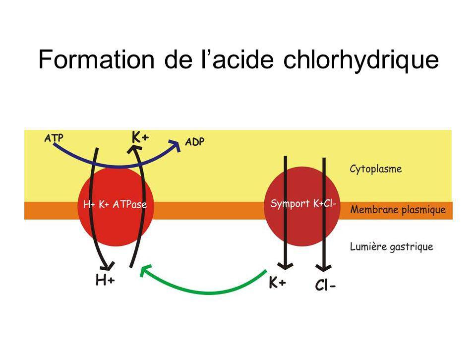 Formation de lacide chlorhydrique