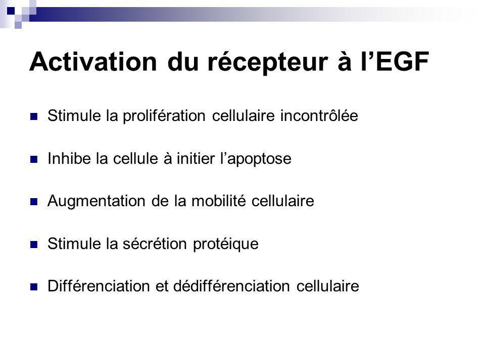 Activation du récepteur à lEGF Stimule la prolifération cellulaire incontrôlée Inhibe la cellule à initier lapoptose Augmentation de la mobilité cellulaire Stimule la sécrétion protéique Différenciation et dédifférenciation cellulaire