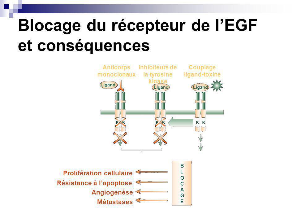 Blocage du récepteur de lEGF et conséquences Prolifération cellulaire Résistance à lapoptose Angiogenèse Métastases BLOCAGEBLOCAGE Mort cellulaire Blocage des voies de transduction Anticorps monoclonaux Inhibiteurs de la tyrosine kinase Couplage ligand-toxine Ligand